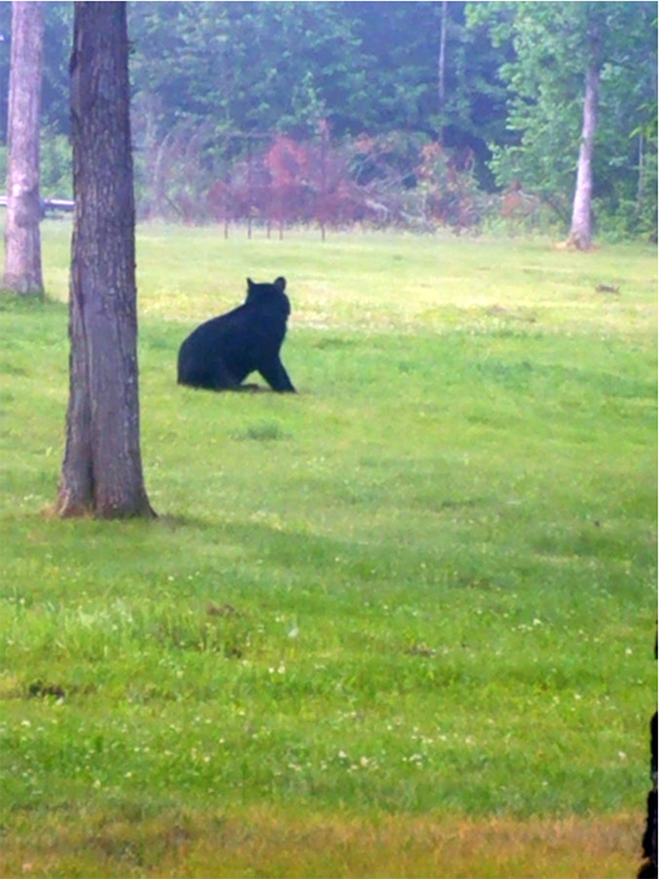 Matt and I woke Friday morning to this guy in the yard. He watched us load up the truck and go fishing and just laid there on the ground.